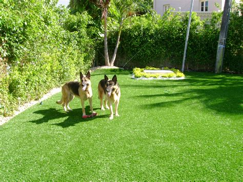 do dogs need grass backyard softlawn 174 pet turf fake grass for dogs synthetic turf