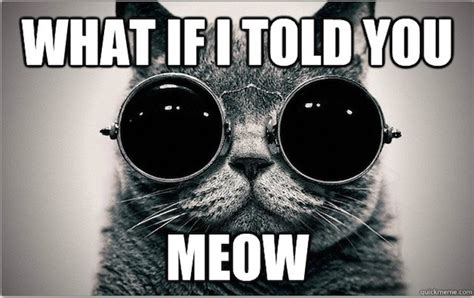 Cat Meow Meme - morpheus cat welcome to the litter box of the real