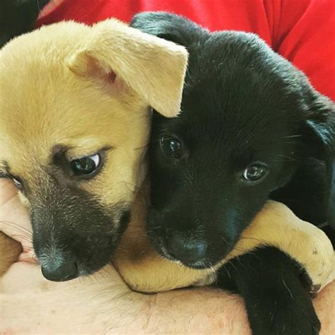 places where you can play with puppies island where you can play with rescue puppies