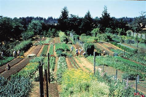 intensive vegetable gardening temperate climate permaculture biointensive gardening and