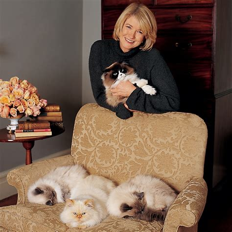 how to remove pet hair from sofa removing pet hair from upholstery martha stewart