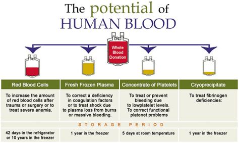 Shelf Of Whole Blood by Indian Journal Of Transfusion Medicine