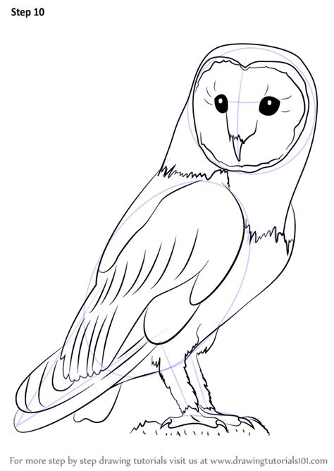 how to draw an owl learn to draw a cute colorful owl in learn how to draw an owl owls step by step drawing