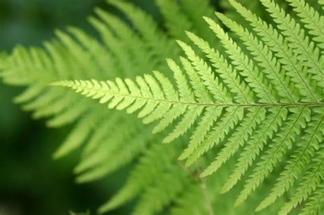 patterns in nature leaves interesting patterns and fractals from nature you the