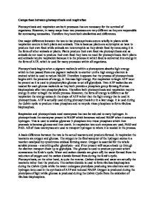 Cellular Respiration Essay by Comparison Between Photosynthesis And Respiration A Level Science Marked By Teachers
