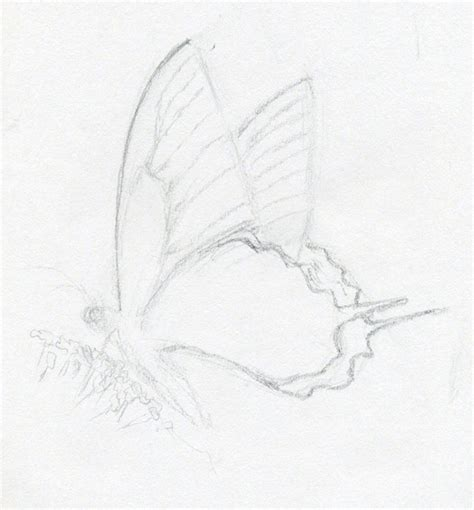 drawing sketches images make butterfly sketch quickly and easily speed is the key