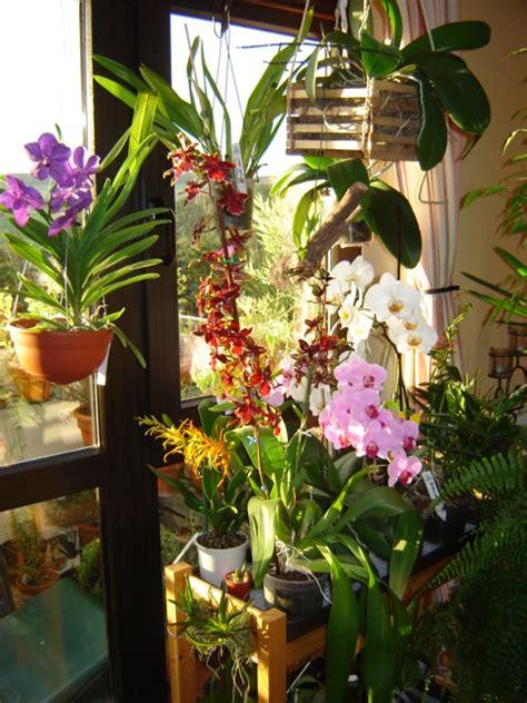 Orchideen Gestell orchideen rettung haus garten forum chefkoch de