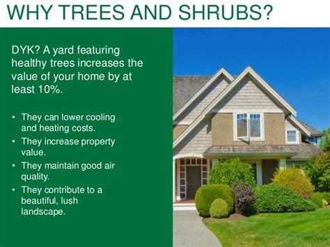 increase the value of your home with trees and shrubs a