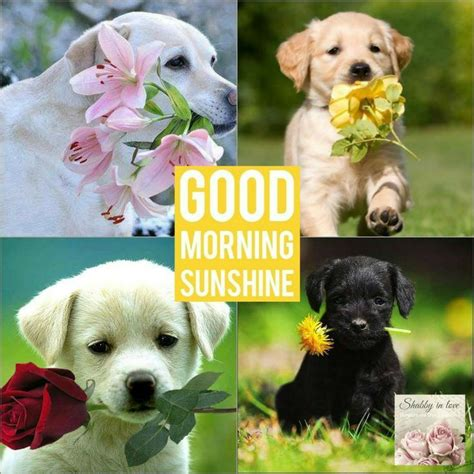 morning puppy adorable fluffy puppy pink fluffy puppy quotes