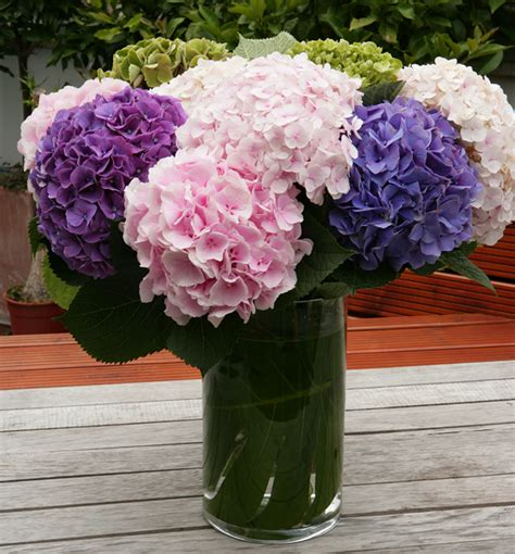 Hydrangea In Vase hydrangea vase arrangement flowers florist in islington
