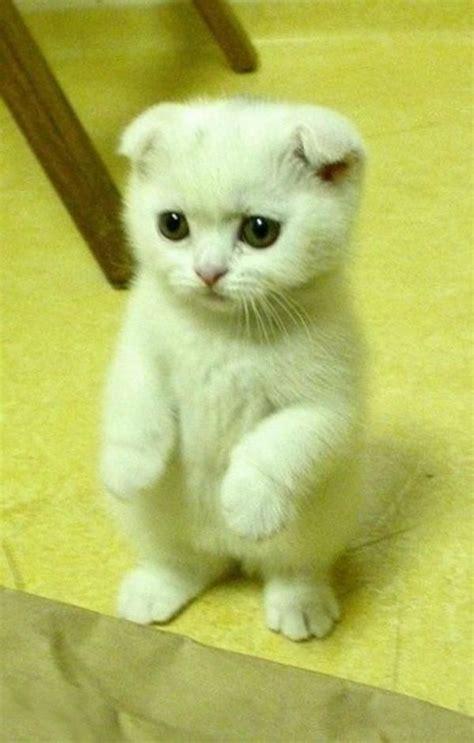 41 photos qui vont vous donner envie d?adopter un chat