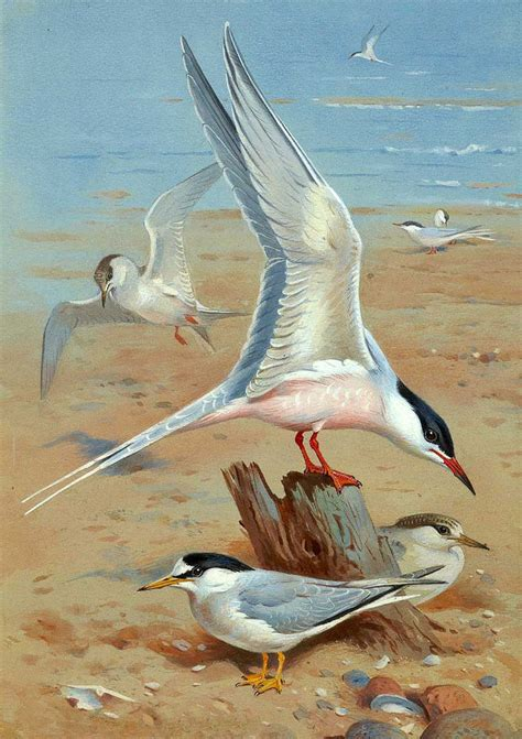 painting the sea people and birds with watercolor basics no framed oil painting nice birds seagull sea birds by