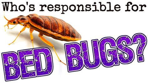who is responsible for bed bugs landlord or tenant who s responsible for bed bugs american landlord