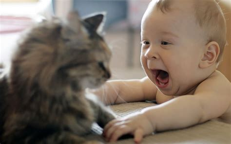 wallpaper baby and cat funny baby and cat hd wallpaper wallpup com