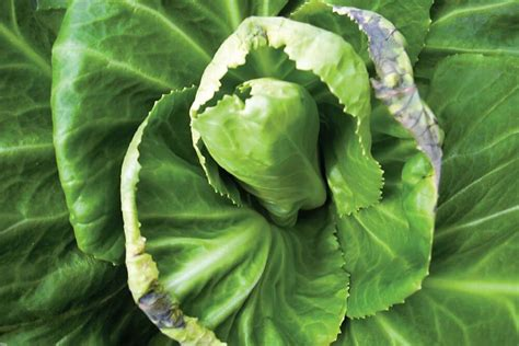 boost  calcium levels   hydroponic system