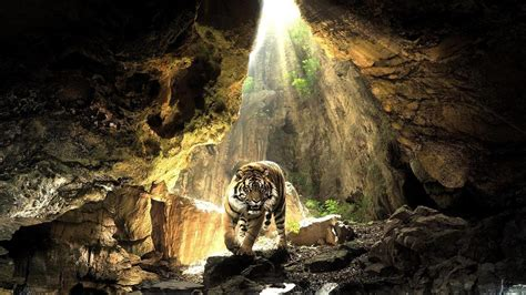 Animal Backgrounds Wallpaper Cave | cool tiger backgrounds wallpaper cave