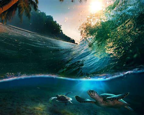 ocean underwater beauty water wave nature sea turtle