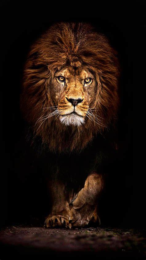 ultra hd mufasa lion wallpaper   mobile phone