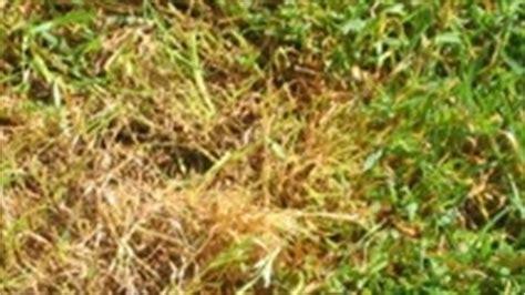 Pilze Im Rasen Anzeichen by Fragekasten F 252 R Gartenfragen Mit Anleitungen Und