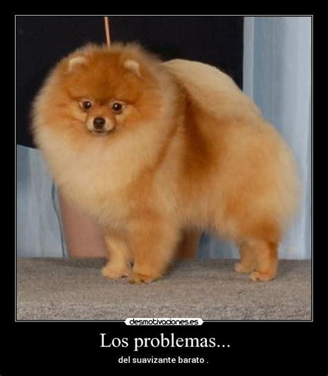 imagenes extrañas de humanos perros informaci n sobre perros razas de perros fotos
