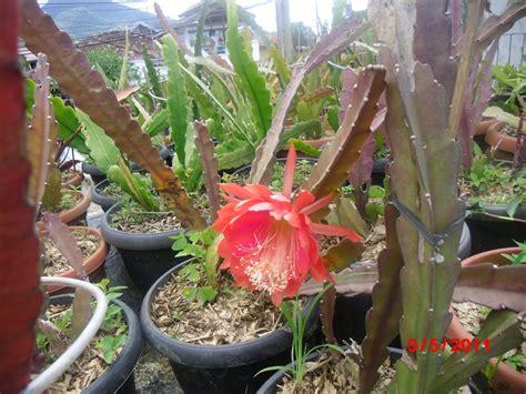 Garden Bunga Hias tanaman hias firdaus garden