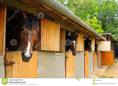 stall pferde pferde im stall lizenzfreie stockbilder bild 18709279