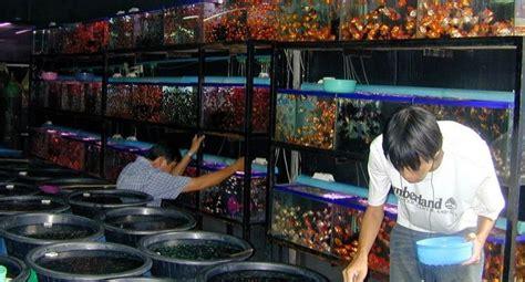 Timbangan Untuk Ikan wadah untuk ikan hias koengilmu
