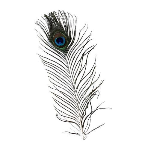 Aplikasi Bulu Kipas Flh 7 buy bulu merak asli panjang 25 30 cm untuk souvenir pernikahan pajangan aksesoris kerajinan