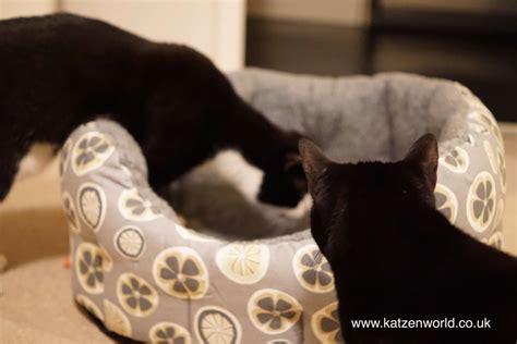 the bed intruder oliver nubia the bed intruder katzenworld