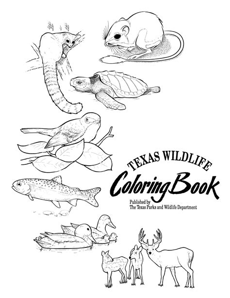 wildlife coloring pages wildlife coloring book page 1 of 8 the portal to