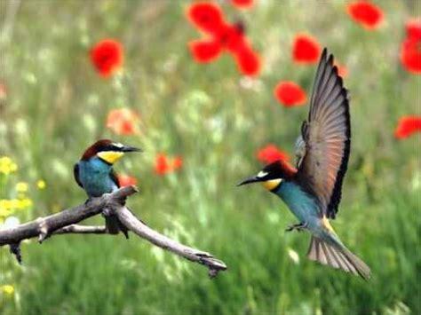 las aves exticas mi 201 stas son las 10 aves m 225 s ex 243 ticas del mundo notas la biogu 237 a pajaros y aves