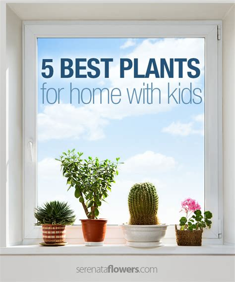 10 houseplants that clean the air urban planters best flowers for home 28 images 10 houseplants that