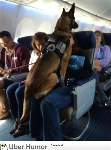 Can Dogs Fly In Cabin by Flight Attendant Made An Announcement To Congratulate