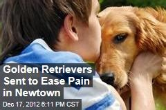 golden retrievers newtown ct golden retriever news stories about golden retriever page 1 newser