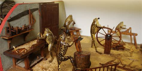 croatias froggyland museum   strangest  youll  today
