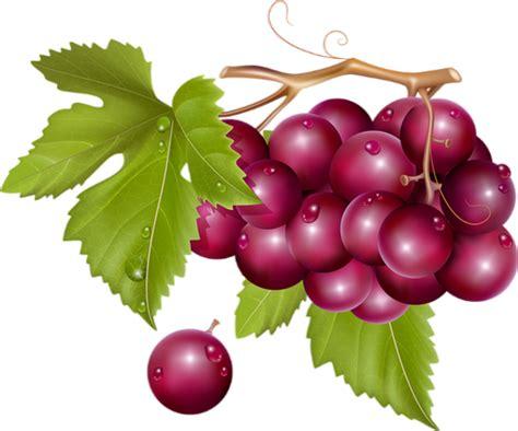 imagenes de uvas vector fruits raisins