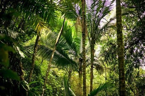 Dschungel Pflanzen by Palmen In Einem Dschungel Stock Foto