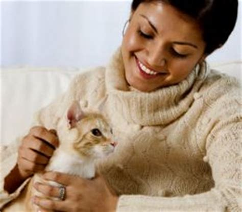 good house pets besides dogs cats common diseases that can affect your pet cat the pets