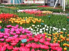 Most Beautiful Flower Garden Keukenhof S Most Beautiful Flower Garden Travelvivi