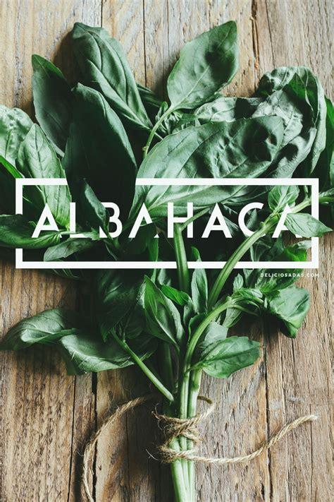 albahaca cocina albahaca fresco y dulce aroma para la cocina