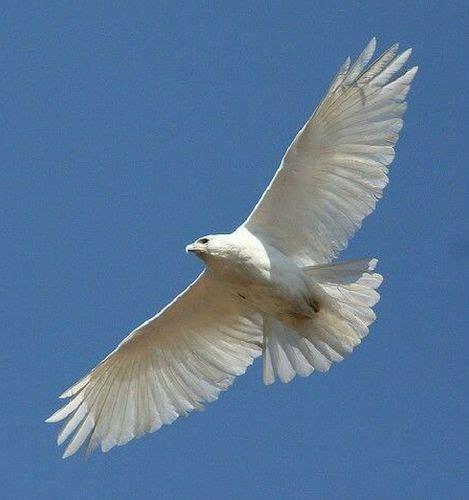 cuentos cortos para pensar cuentos cortos para pensar vi el vuelo del halc 243 n widemat