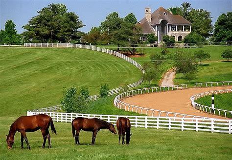 Sale King S Ky 8814a kentucky donamire farm david ohmer flickr