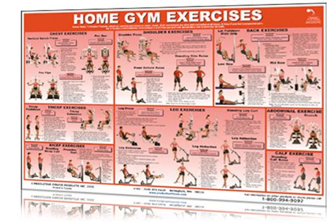 home gym workout plan gym exercise chart for biceps