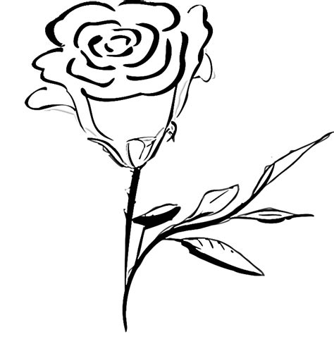 free coloring pages of rose flowers