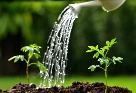 Watering Garden by Vermont Garden Journal Three Tips For Watering Vermont