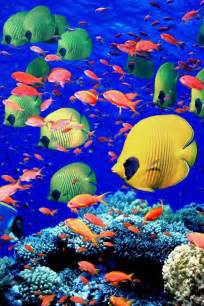 colorful fishes 17 best ideas about colorful fish on pretty
