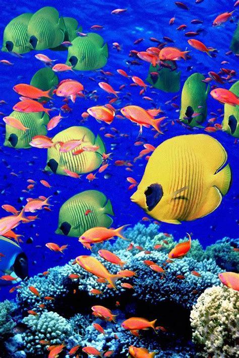 colorful ocean wallpaper 179 best peces y dem 225 s bichos under the sea images on