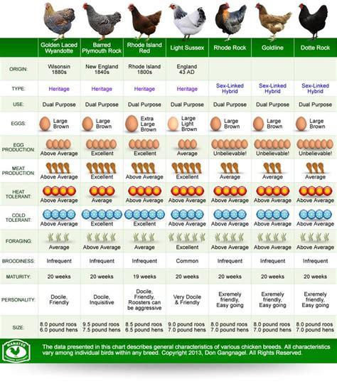 Backyard Chickens Chart Best 25 Chicken Breeds Ideas On Hens Chicken
