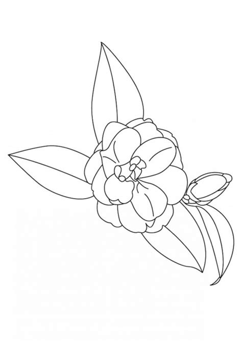 camellia flower coloring page beautiful printable flowers coloring pages