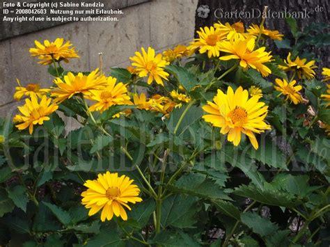 gelbe gartenblumen bestimmen actof info